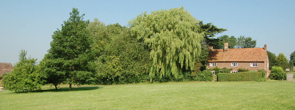 Willow tree, Taken by David Rose